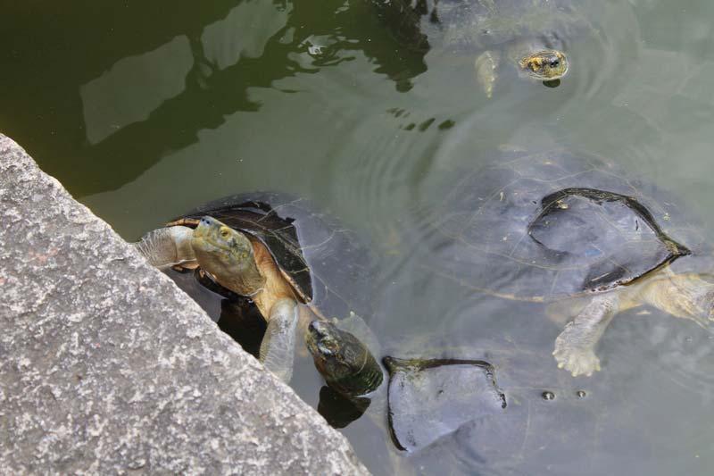 12-черепахи-в-бангкоке