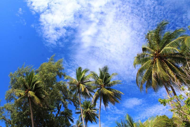 33-пальмы-и-небо