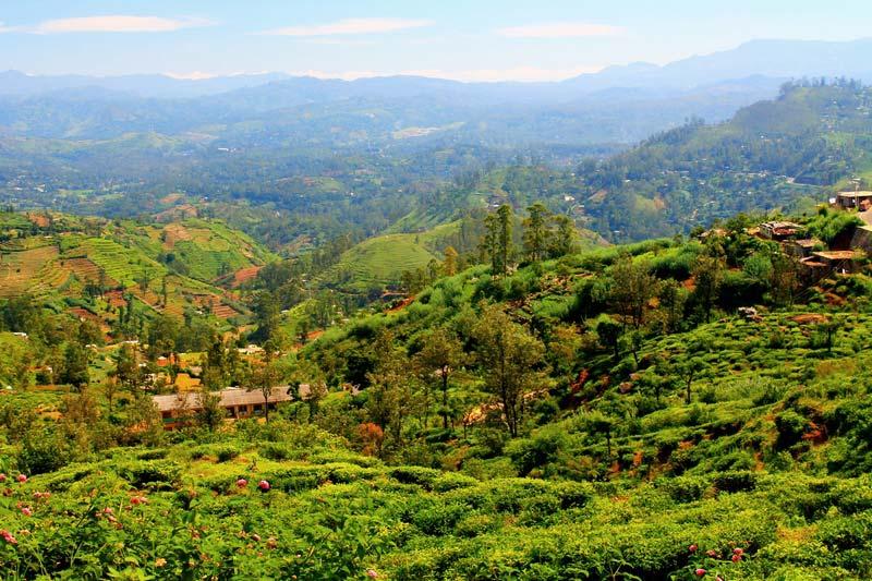 11-шри-ланка-чайные-плантации