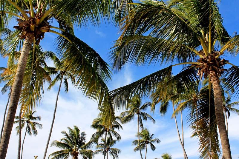 17-пальмы-и-небо