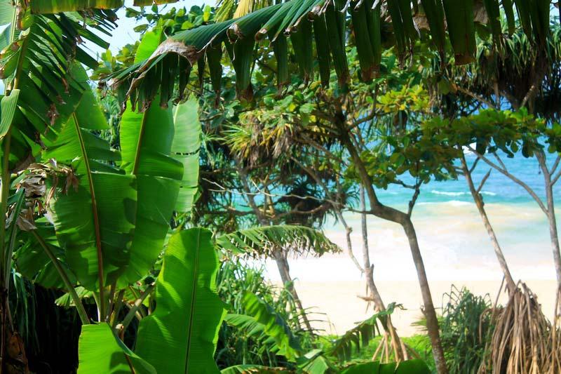 21-джунги-и-пляж
