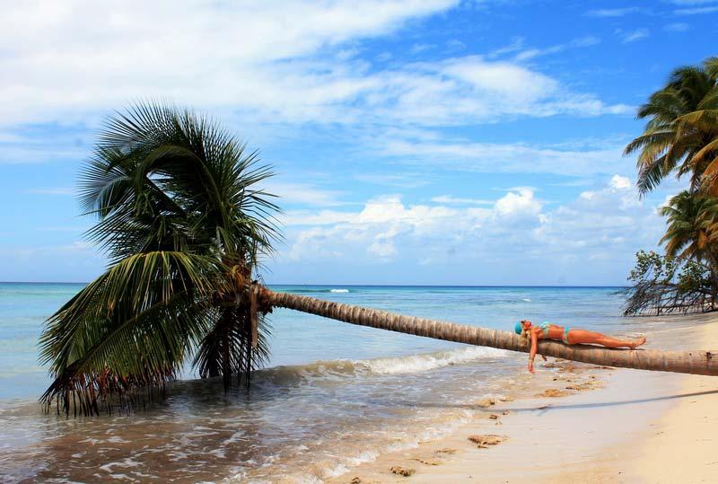 19-пальмы-остров-саона-доминикана