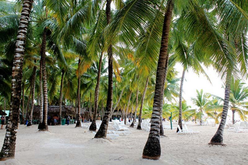 23-саона-пальмы