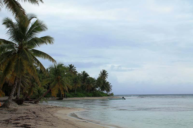 24-саона-пальмы