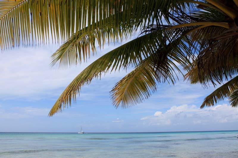 39-пальма-море-катамаран