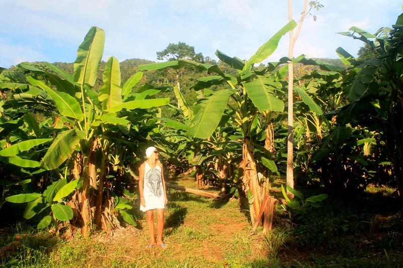 7а-банановые-плантации