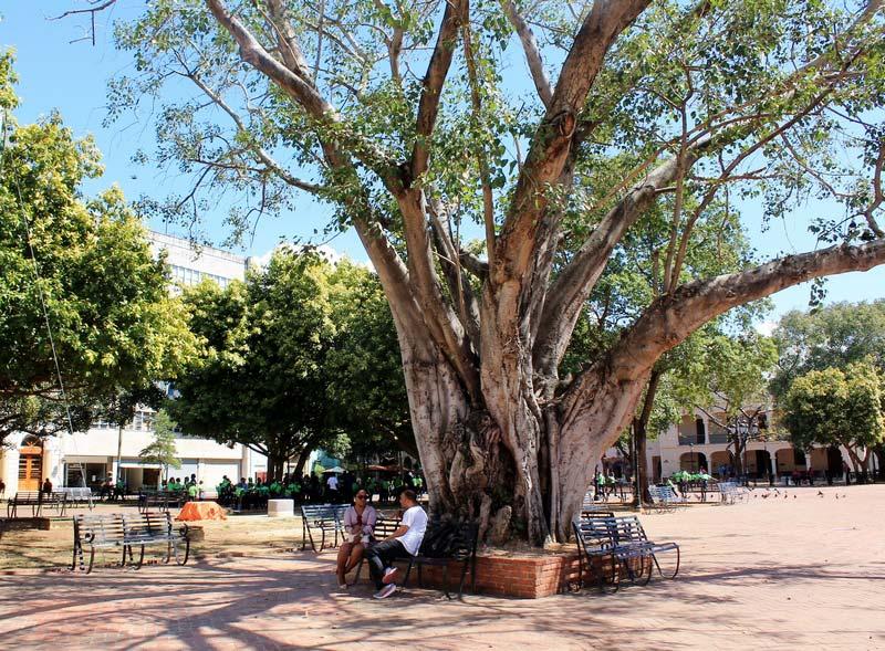 19-большие-деревья-доминикана