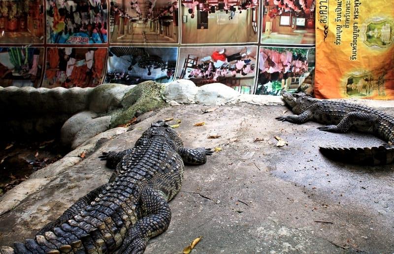 14 Бангкок храм крокодилов