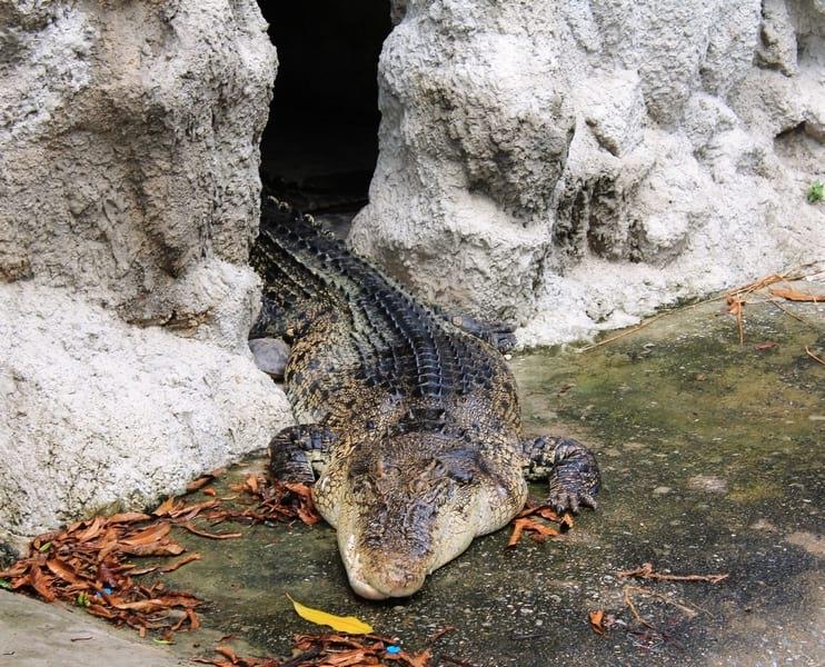 4 храм крокодилов Бангкок