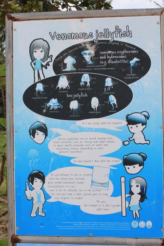 7-медузы-на-пангане