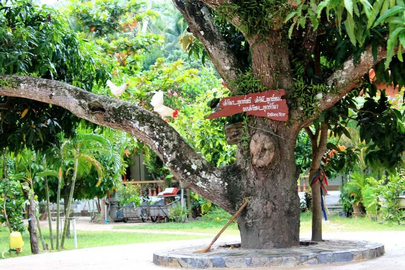 13-Wat-Pho-Phangan