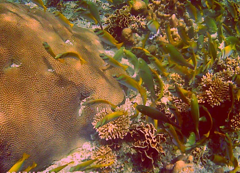16-ко-тао-рыбы