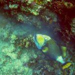 17а-ко-тао-подводный-мир