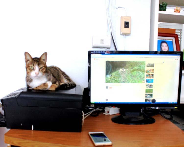 3а-кот-и-монитор