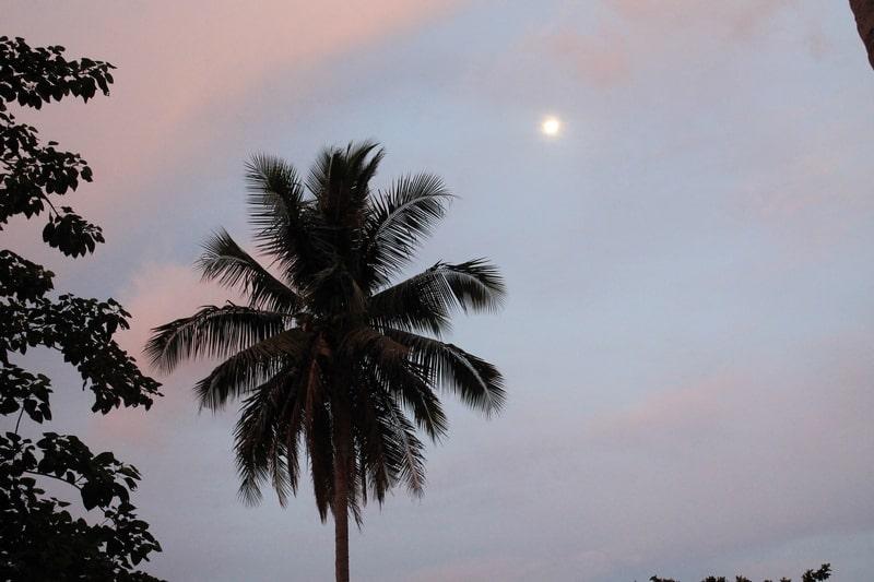 луна и пальма