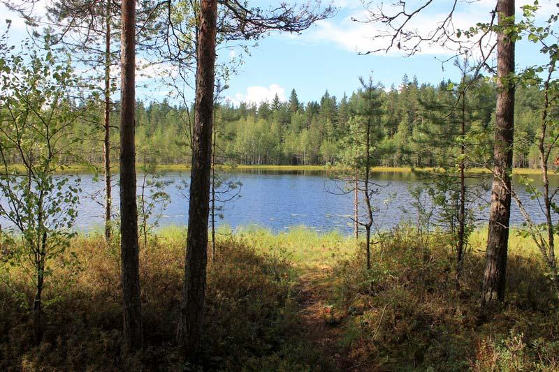 лесное озеро в Карелии