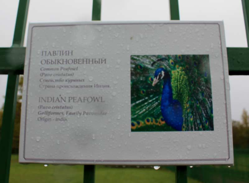Ораниенбаум-зверинец