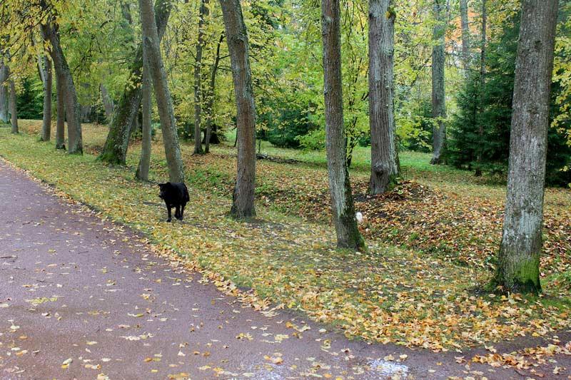 Ораниенбаум-верхний-парк