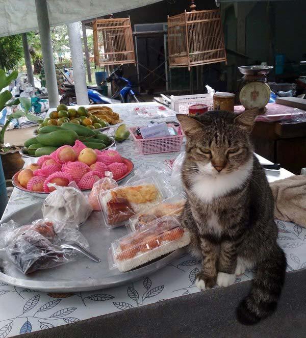 кошка-на-столе
