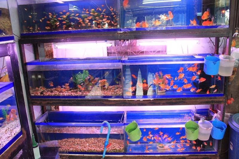 рыбки-Транг