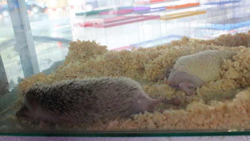 спящий-ежик