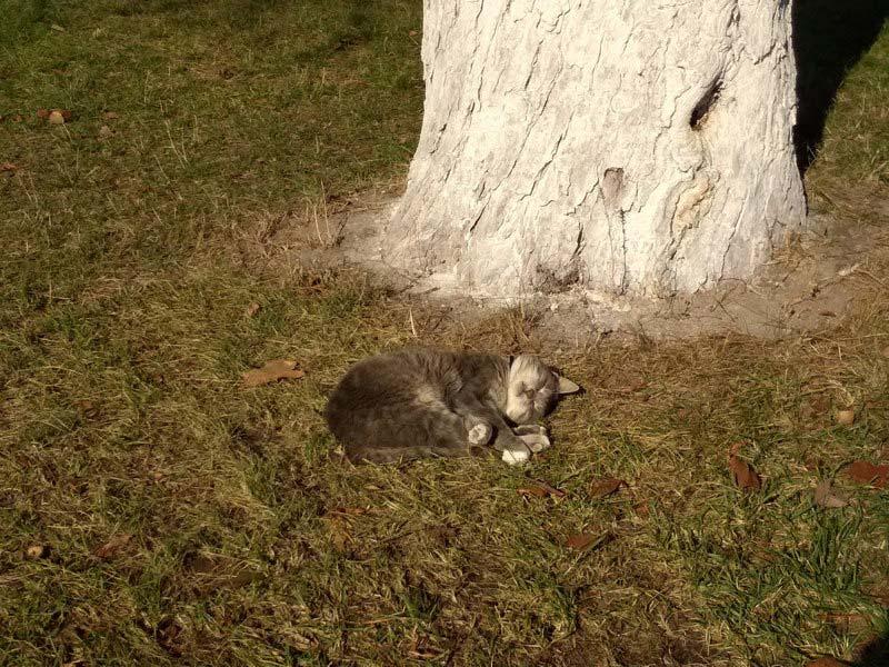 кот-спит-под-деревом