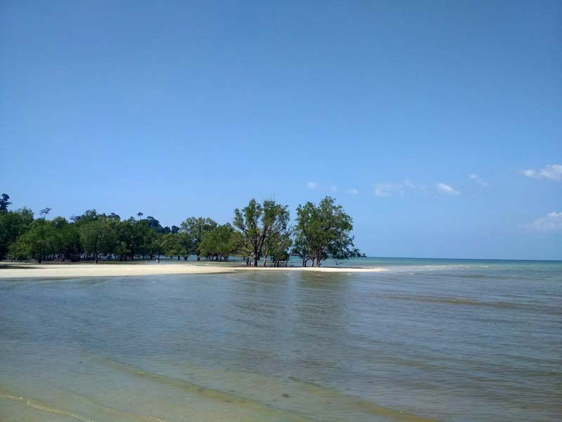 мангры-в-море