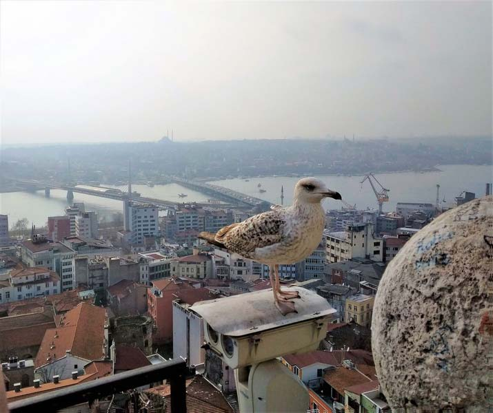 Стамбул вид с Галадской башни
