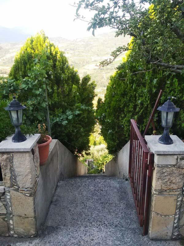 Кипр-горы-виноград