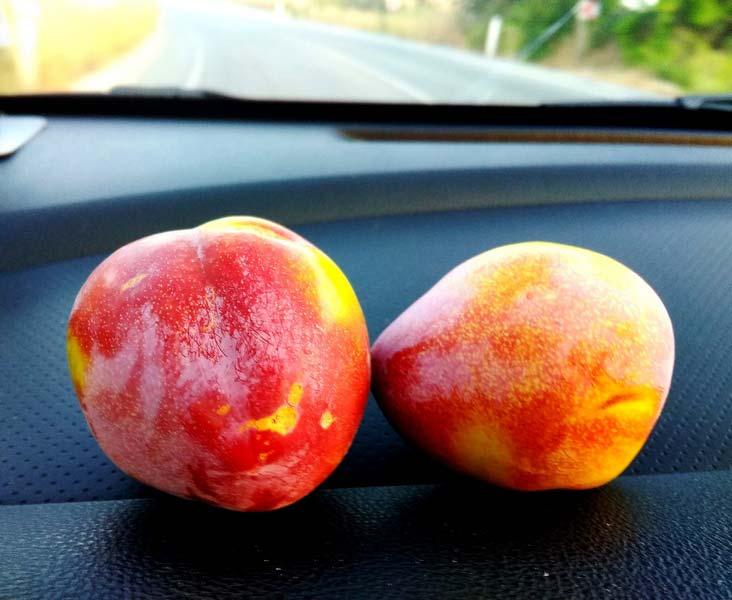 кипрские-фрукты