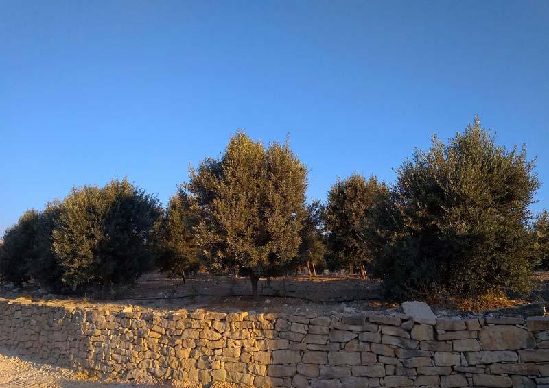 Пейзажи-Кипра