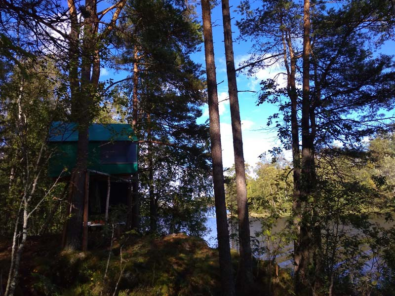 Парк Ладога домик на дереве