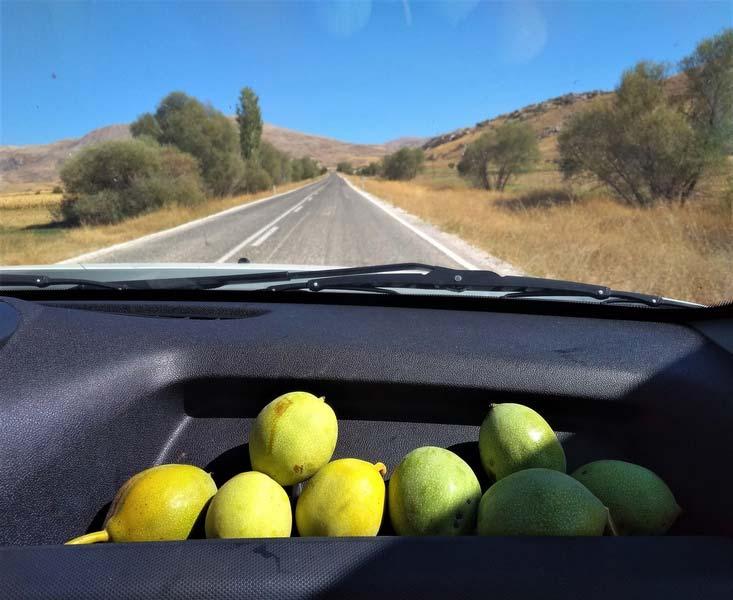 грецкие-орехи-в-Турции